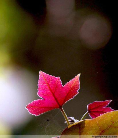 人生健康妙语十二条 - 红叶 - 红叶的博客
