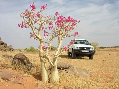 沙漠玫瑰 - 淡淡云天 - 淡淡云天