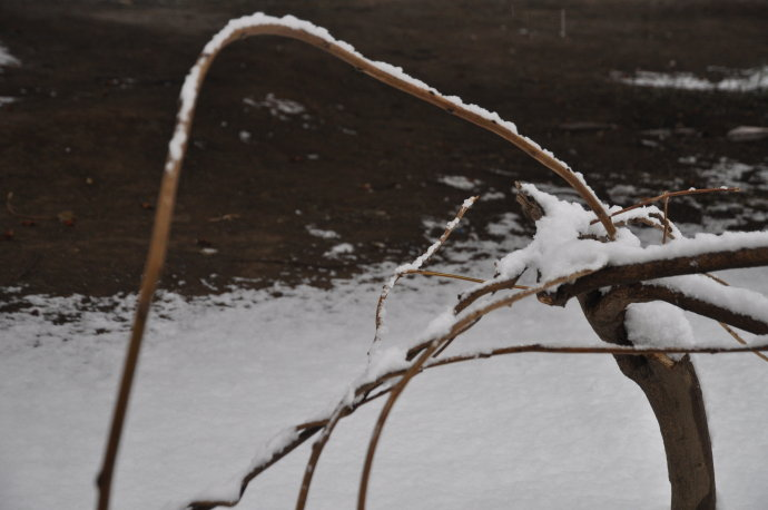 2010-3-14雪景之二 - 陶东风 - 陶东风