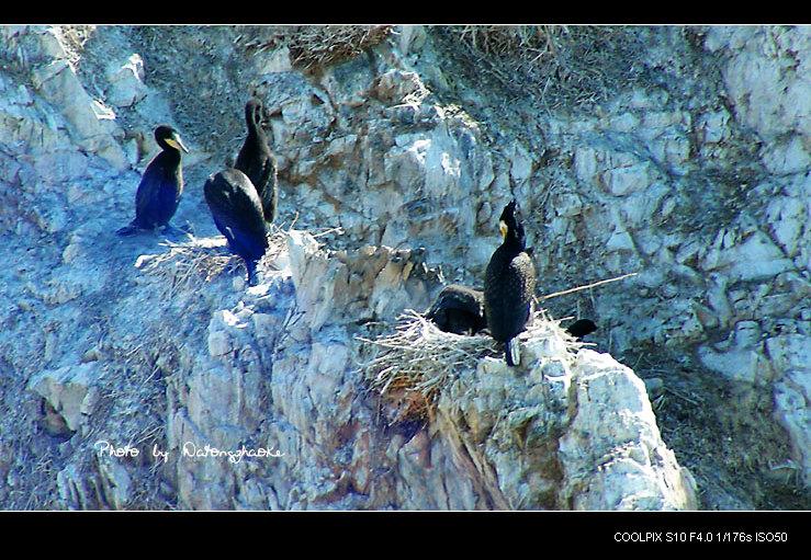 [原创] 鸟的天堂---青海湖鸟岛 - 老K - 老K的历程