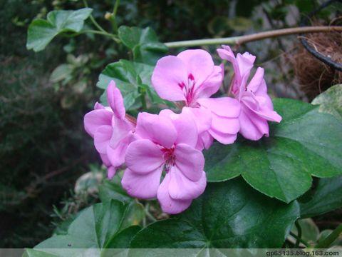 季节的花朵--2 - 六月荷花 - 六 月 荷 塘