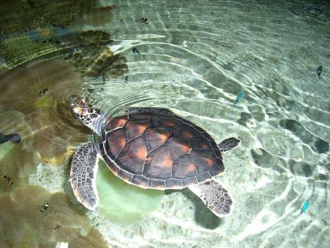 呵呵   这个乌龟就是天上的仙女,我的四个就是地上的垃圾.喂了那么