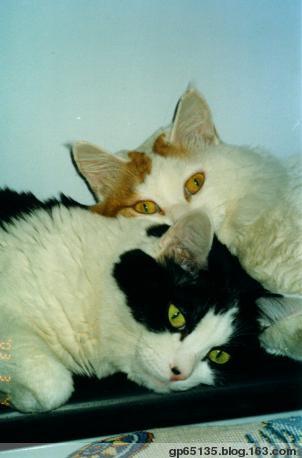 爱猫日记(一) - 六月荷花 -  六 月 荷 塘