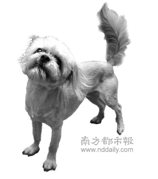 [雕凤原创]流浪狗的疯狂计划(小说)三 - 文心雕凤 - 文心雕凤的博客