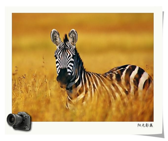 动物世界(1) - mjj410