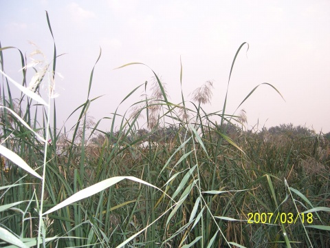 童年里的大山(疏勒河的红柳原创) - 疏勒河的红柳 - 疏勒河的红柳