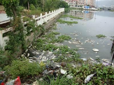 每个人已经深受污染之害,为什么还这么麻木? - 胡延平___网路生态 - 胡延平—网路生态