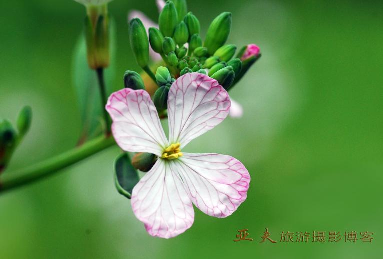 (原摄)春之曲 系列二 - 高山长风 - 亚夫旅游摄影博客