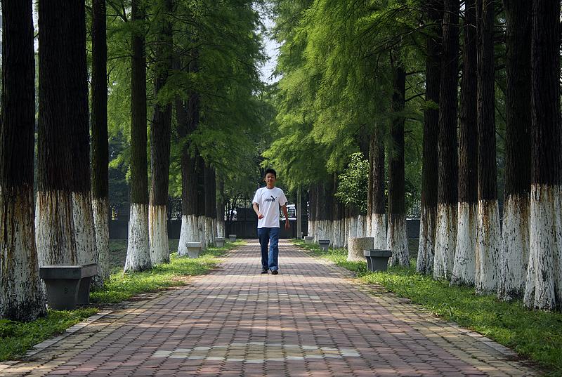 【原创】绿色校园 - 歪树 - 歪树