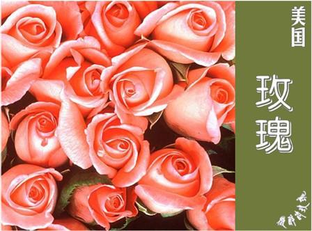 漂亮的 各国国花 - 。.| ↙`蕶誶哋、庝。ゞ☆ - 蕶誶哋、庝。   博客