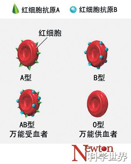 人为什么有不同的血型?动物也有不同的血型吗? - kxsj - Newton-科学世界