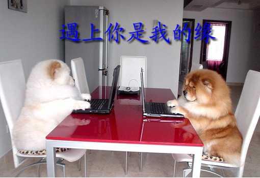 网缘 - 雪中观梅 - xuezhongmei的博客