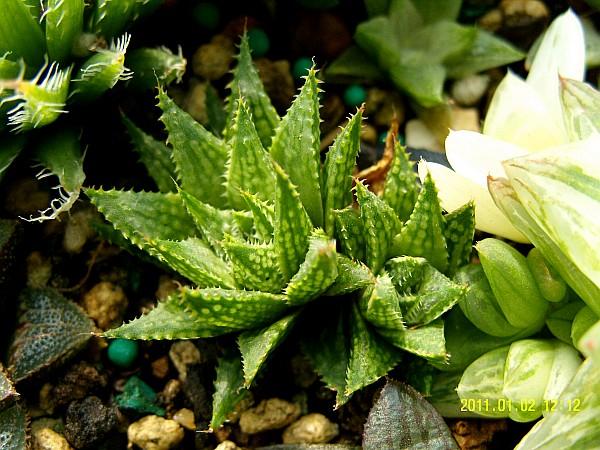 一盆丰富多彩的多肉植物  - 落霞·孤骛 - 落霞·孤骛的博客