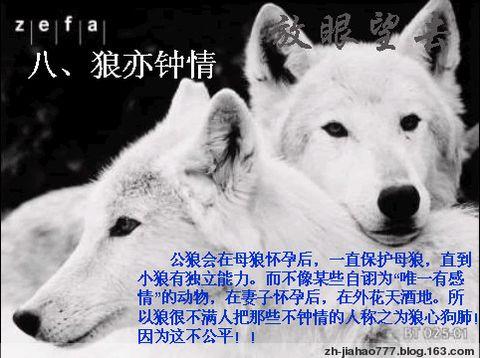 狼的十大处世哲学(组图) - 保持初学的心 - 内善外则善