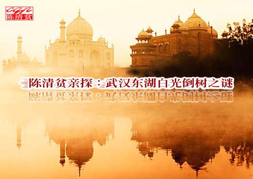 陈清贫亲探:武汉东湖白光倒树之谜 - 陈清贫 - 魔幻星空的个人主页
