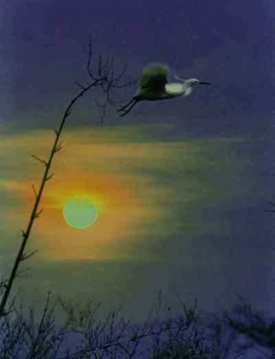 鸟与梦飞翔 听月无声 听月无声