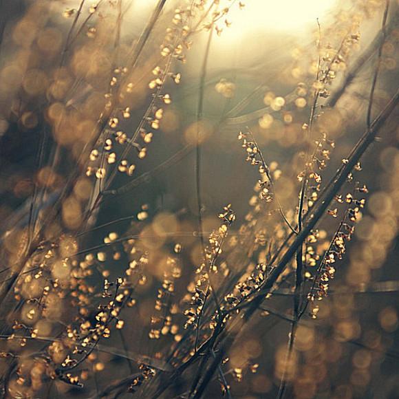 我喜欢这篇日志也希望你喜欢 - 镜花水月终是梦 - 镜花水月终是梦的博客