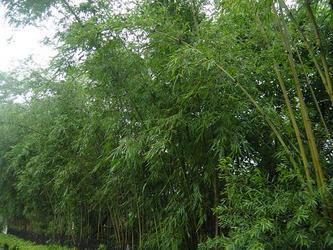 上联:风吹雨打竹叶舞