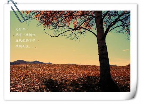 2010年10月11日 - 心雨轩 - 心雨轩
