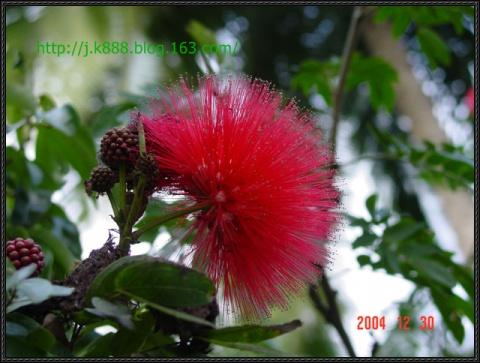 【原创图片】椰岛风情之二  (2004.12) - 珠峰 - 插上飞翔的翅膀