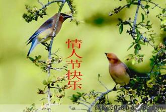 借摄友的对鸟做张贺卡 - 雪山老人 - 雪山老人的博客