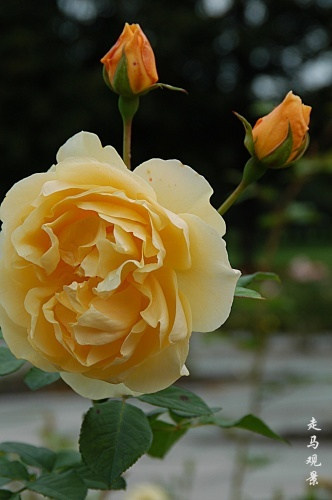 花花世界 - 西樱 - 走马观景