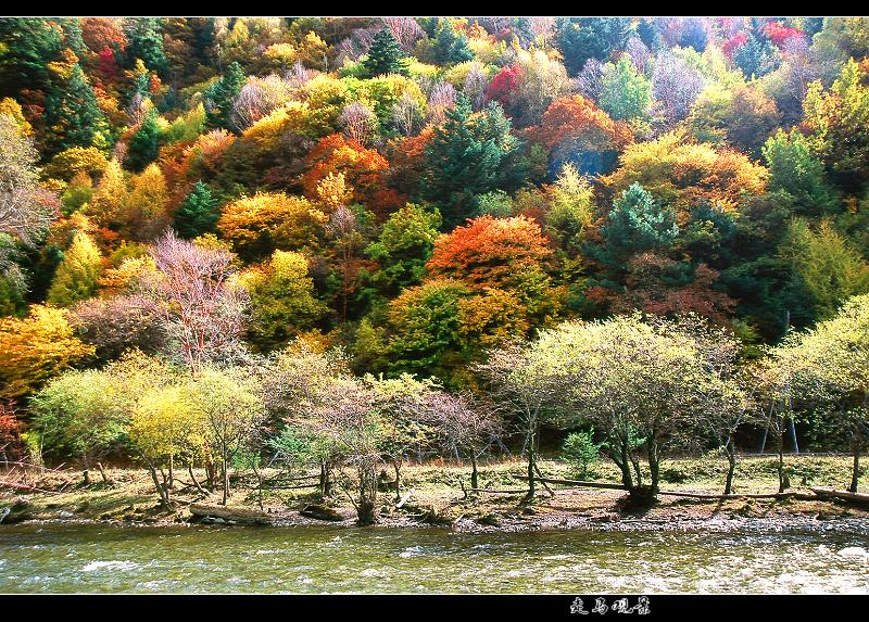 最新出炉的中国最美秋景 - 西樱 - 走马观景