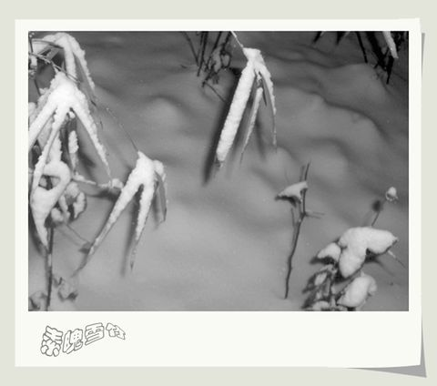 [原创]素魄雪竹 - Kajia - 脚印一点点
