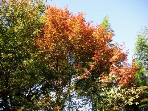 福州北峰山区红叶 - 木头人 - sampson827的博客