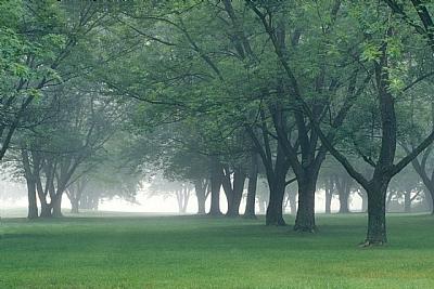 你属于那棵树——很神奇哦!  - 樟子松白桦林 - jya5283 的博客
