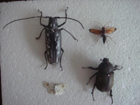 我自己制作的昆虫标本