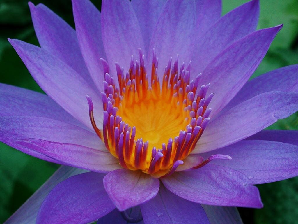 花卉欣赏 - 风清明月  - 风清明月的博客