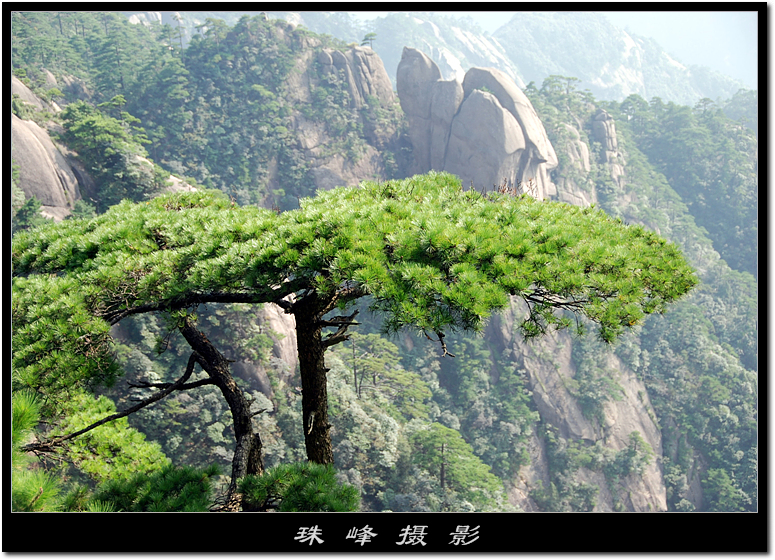 【原创】黄 山 (5/6) - 珠峰 - 插上飞翔的翅膀