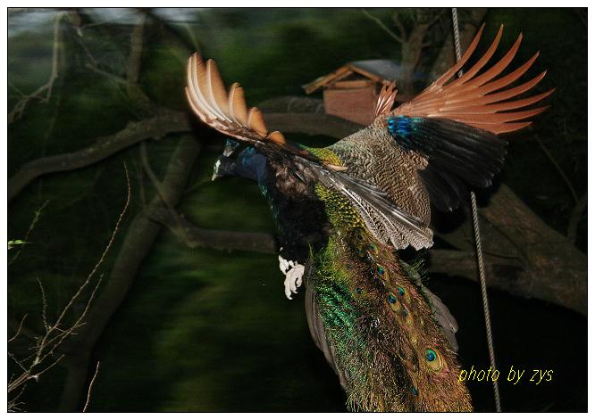 飞到天涯去不回【原】 - 自由诗 - 人文历史自然 诗词曲赋杂谈