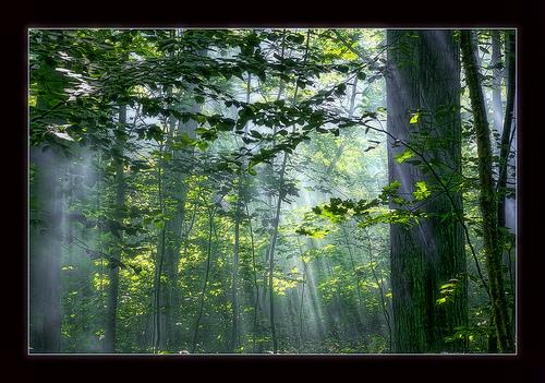[都灵日志]多雨的春天 - 晨阳 - 晨阳