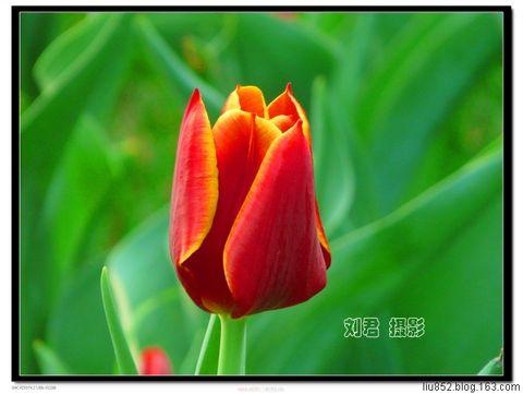 [原创摄影]京城无处不飞花(8) - 刘君 - 刘君 原创摄影之窗