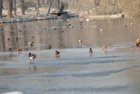 大熊猫的冬日午餐/动物园里过冬的鸟(2008-12-07) - 贝贝的爸妈 - 贝贝的爸妈