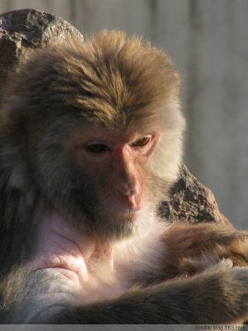 原创动物摄影 - dlmtkly - 爱美树:在光里寻觅☆在影里迷失!