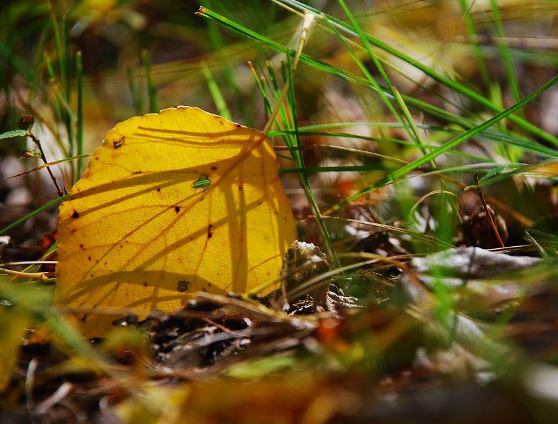 最美是秋天(一)——秋天的记忆 - 星空 - 星空(秋天还会来qthhl)的博客