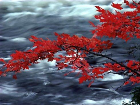 美丽在淡泊中绽放