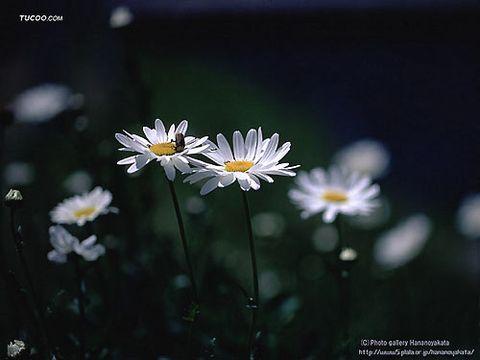 淡的意味  ( 引用 ) - 太空草原 - TAI KONG CAOYUAN太空草原