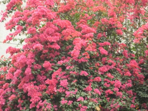 木棉花、紫荆花、勒杜鹃、荔枝花 - 刘亦农 - liuyinong1945的博客