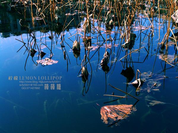 引用 【原创摄影】_残塘偶拾 - 真奇石苑 - 真奇石苑—刘保平的博客