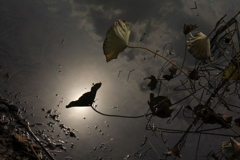 [ 原创]与无为斋主和晓江梅韵两友唱和拾遗  - 不雨也潇潇 - 无风仍脉脉,不雨也潇潇