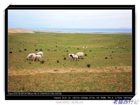 驾车西藏行--青海湖环湖公路
