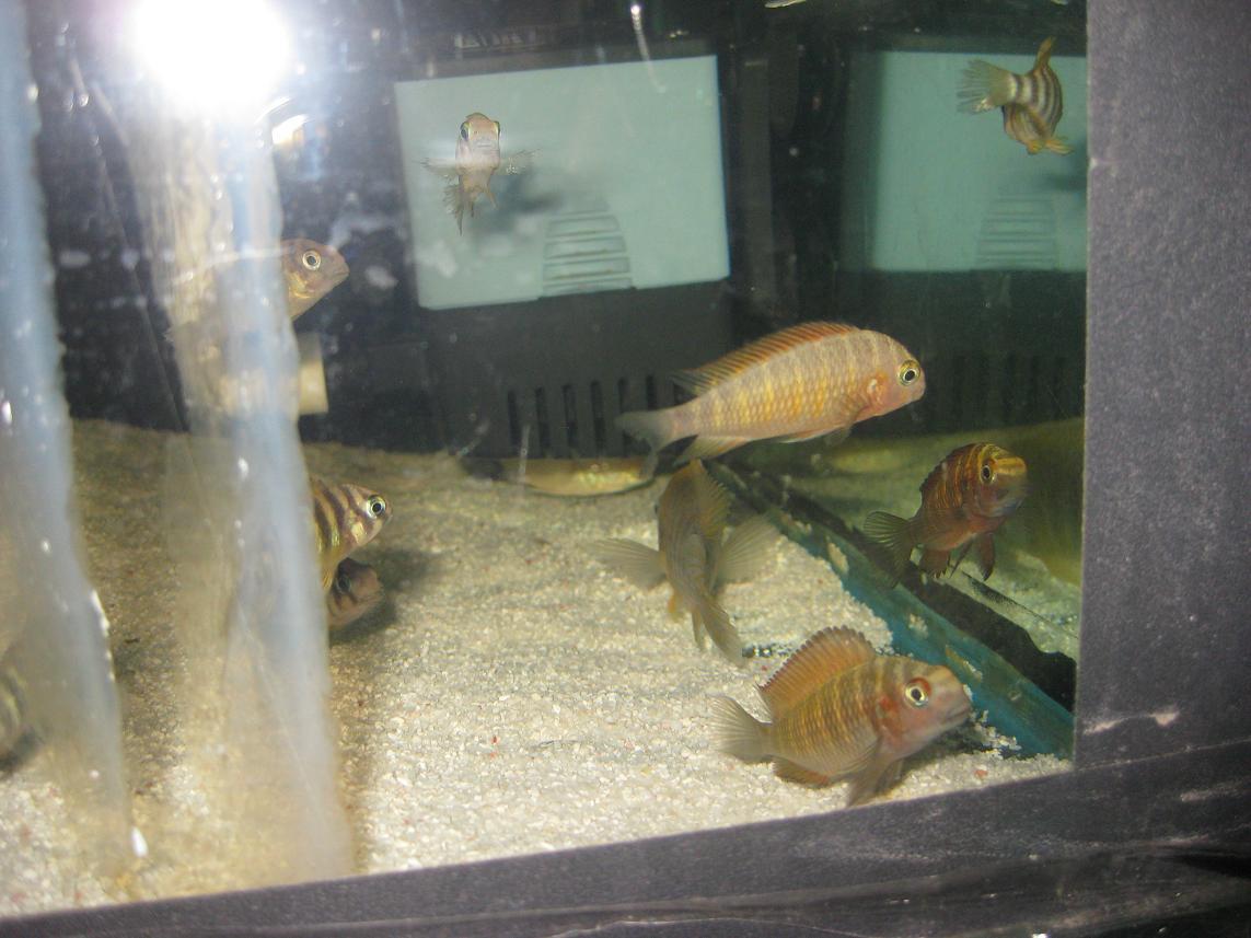 牧鱼水族09年10月15日新到三湖鱼类!! - x-999 - 牧 鱼 水 族