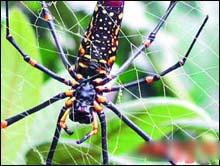 梦见昆虫解释 - 天下无二 - LIUSHAOFENG0533的博客