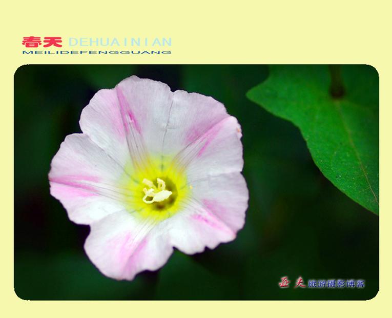 (原摄)春天的怀念 之一 - 高山长风 - 亚夫旅游摄影博客