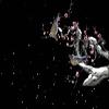 最全的梅花树落叶飞花等素材透明flash动画效果