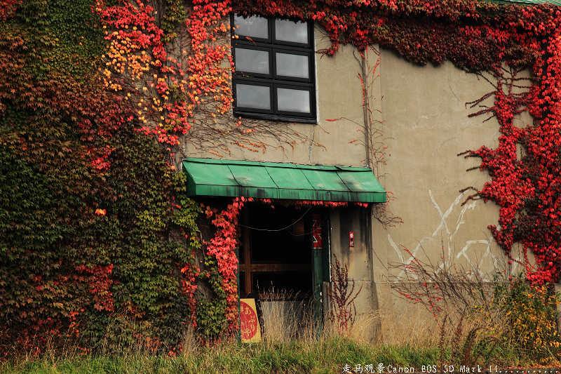 赶赴一场秋天的盛宴____忧郁浪漫的小樽 - 西樱 - 走马观景